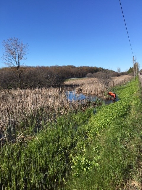 worker removing beaver dam out of municipal drain